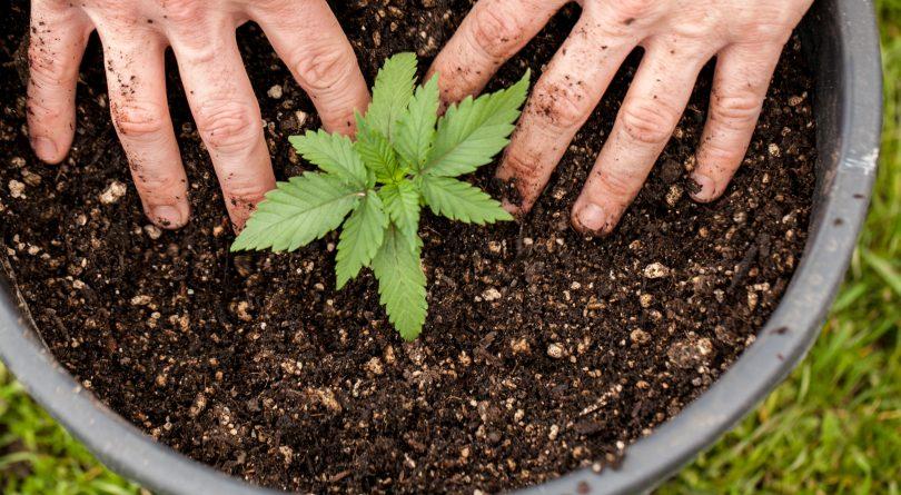 Medical Marijuana Dispensary in Canada