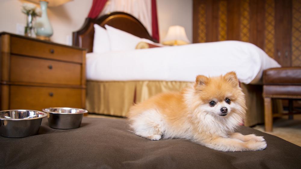 pet friendly hotels in vail beaver creek